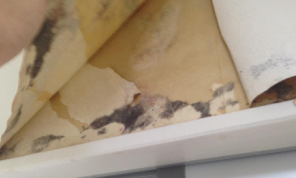 雨漏りで剥がれた天井のクロス