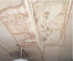 天井に広がった雨染み