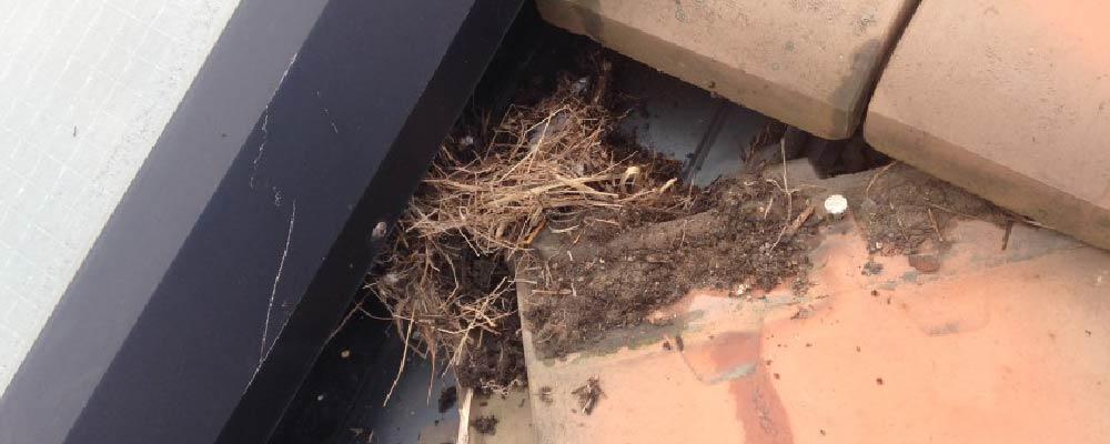 天窓の鳥の巣